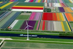 Photos-aériennes-champs-tulipes-Normann-Szkop