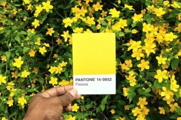Paul-Octavious-pantone-11-545x545
