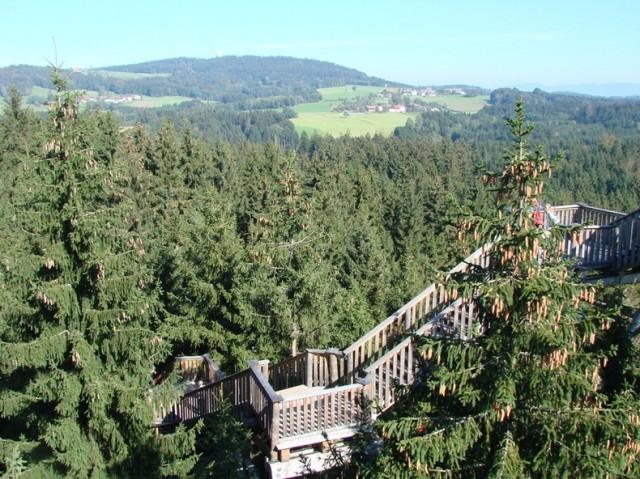 The-Worlds-Longest-Tree-Top-Walk2-640x479