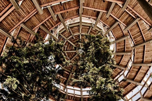 The-Worlds-Longest-Tree-Top-Walk3-640x425