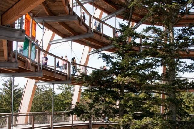 The-Worlds-Longest-Tree-Top-Walk4-640x425