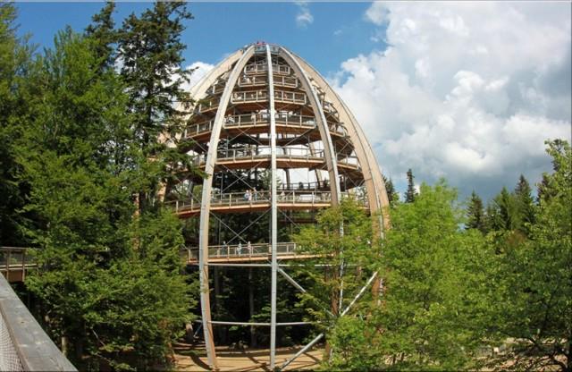 The-Worlds-Longest-Tree-Top-Walk6-640x416