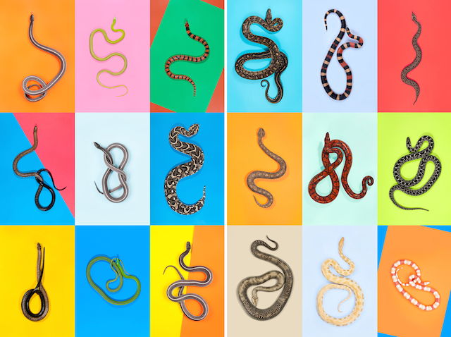 0-snakes