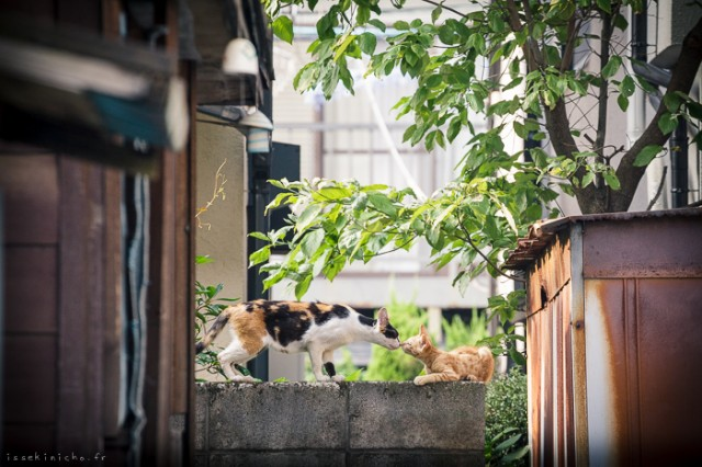 Neko-Land-Cats-in-Japan12-640x426