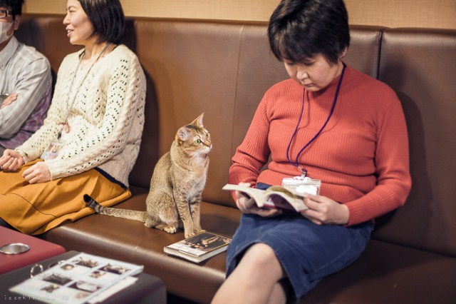 Neko-Land-Cats-in-Japan8-640x426