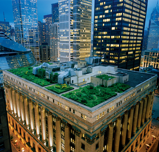 Chicago Green Roof - spanky few