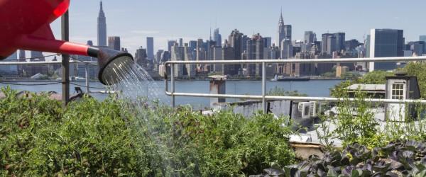 Spanky-few-green-market-locavore-new-york