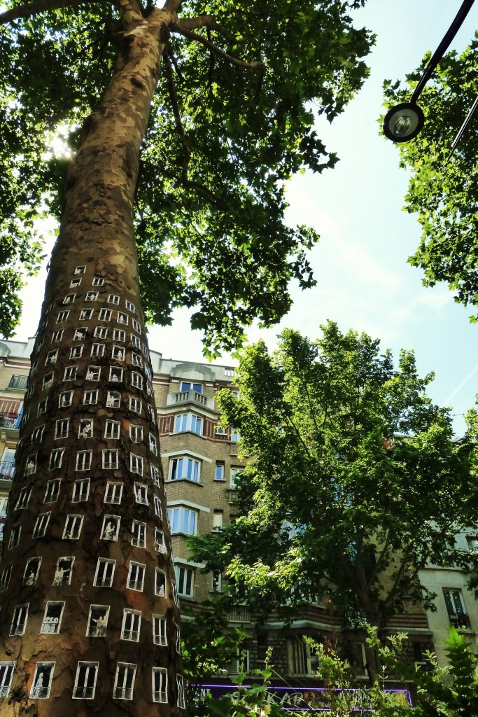 arbres-a-louer-spanky-few