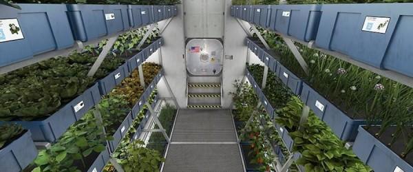 nasa-veggie-food-innovation-spanky-few