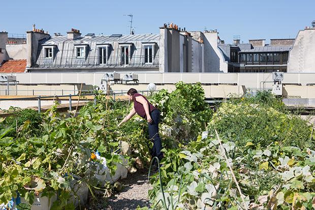 les-pariculteurs-paris-permaculture-spanky-few