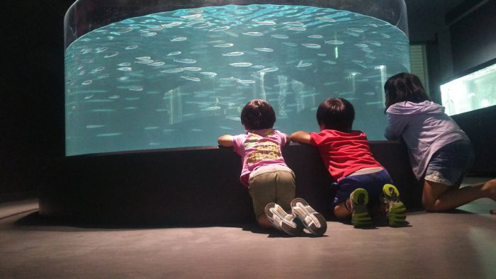 aquarium-muroto-ecole-spanky-few