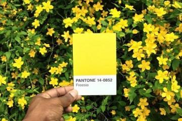 Paul-Octavious-pantone-11-545x545