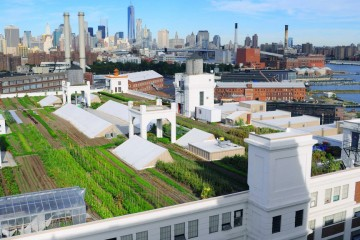 brooklyn-grange-navy-yard