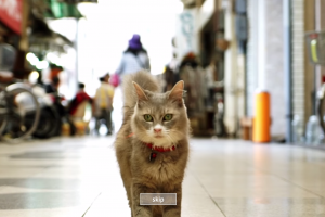 CatStreetView-spanky-few