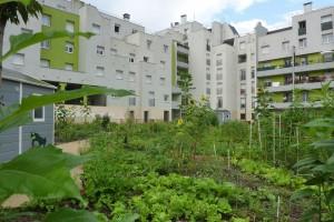 Jardin-partagés-connectés-observatoire-villes-vertes-spanky-few-2