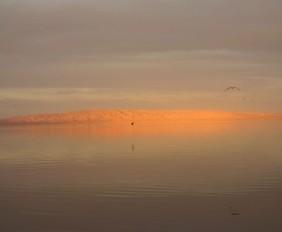 Salton-Sea-Wildlife-USA-Spanky-few