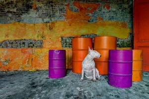 Alice-van-Kempen-urbex-chien-spanky-few